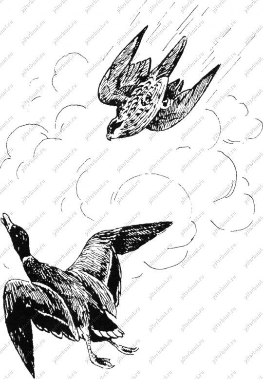 Это фото также находится в разделах: птица скворец фото и птицы...