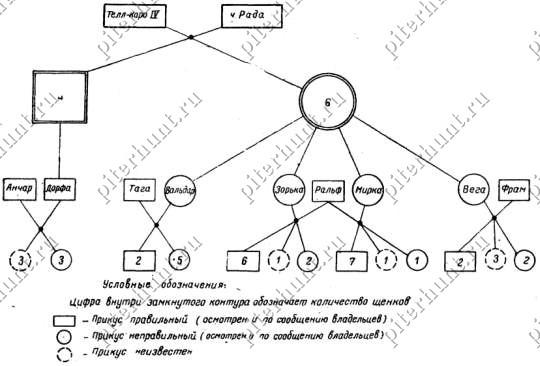 Схема наследования